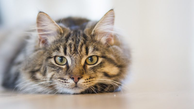Haustierseebestattung Katze