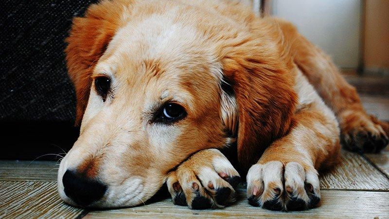 Haustierseebestattung Hund