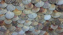 Muscheln als Symbol für Seebestattung