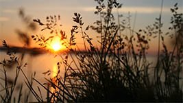 Schilf im Sonnenuntergang als Symbol für Seebestattung